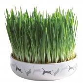 Керамична купа с котешка трева  - 42341