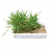 Трева за котки 100гр. - 4235 4236