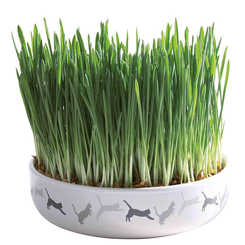 Керамична купа с котешка трева