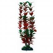 Растение Ludwigia XL - A8011926