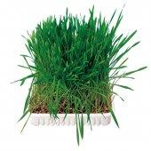 Трева за гризачи - 6035
